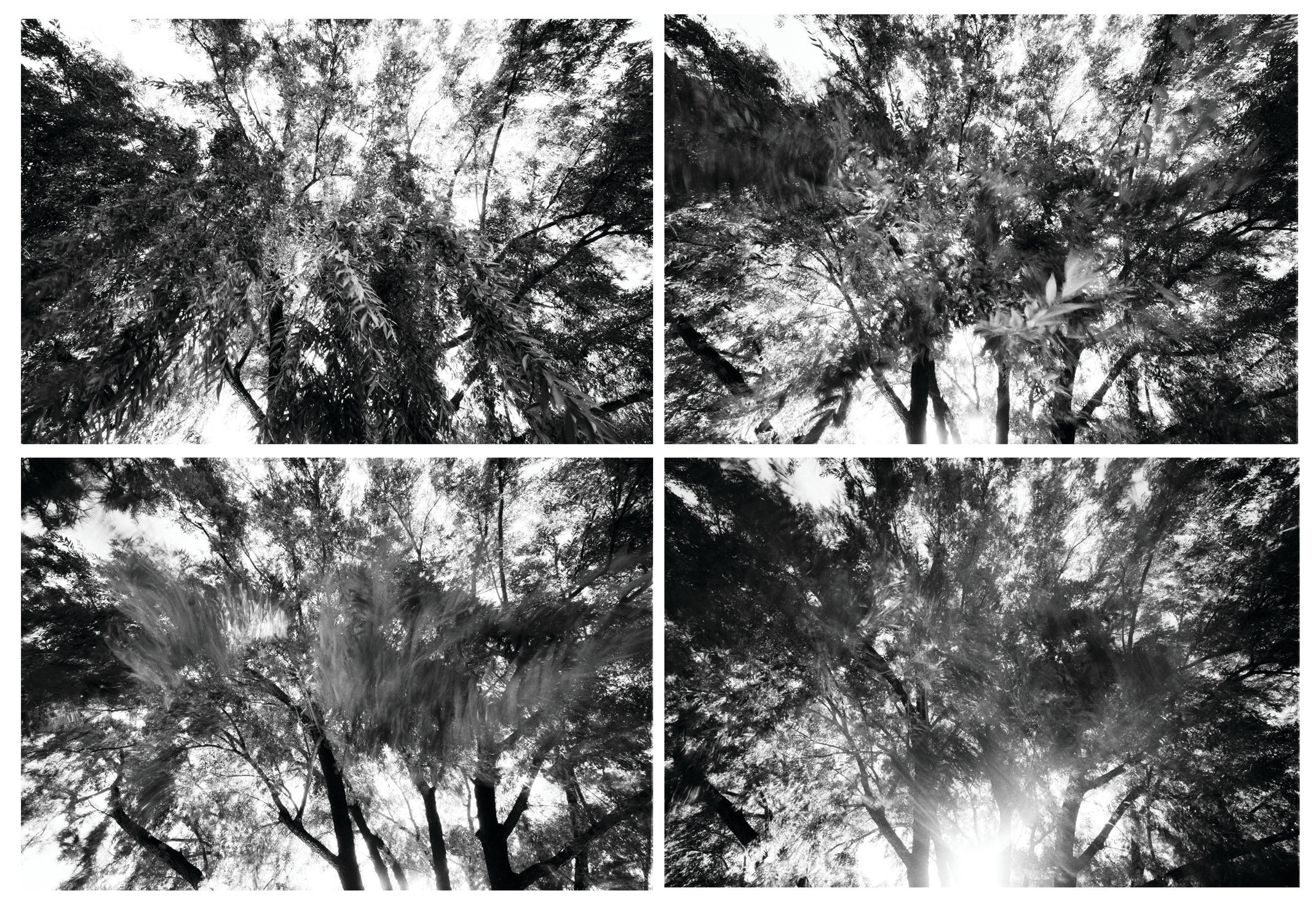 The Stages of Wind Through Willow.jpg