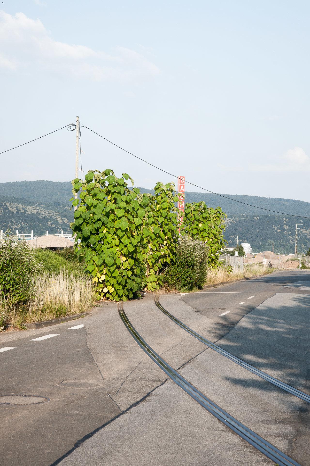 Bahnstadt_28.06.10-1.jpg