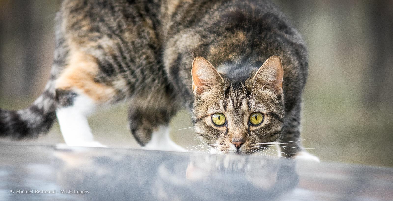 cat-3255.jpg