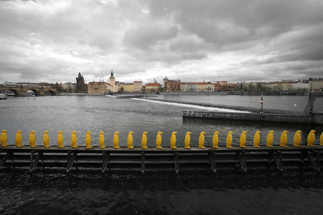 Prague_pinguins.jpg