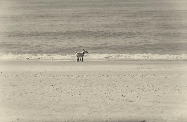 hondje-aan-zee-h1000.jpg