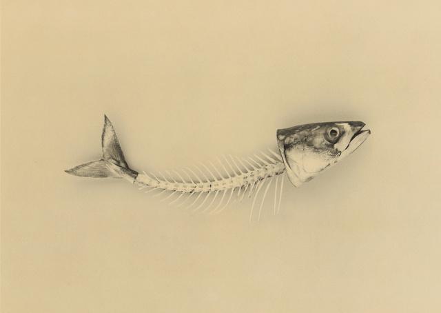 fishbones.jpg