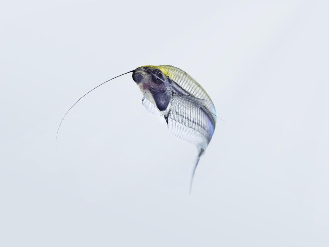 Fish_Shoalin.jpg