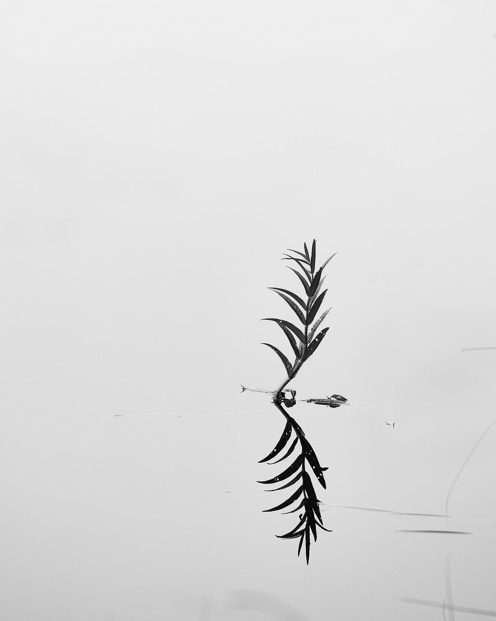 Plant Study 3