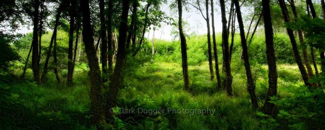 Fern_forest_pan.jpg