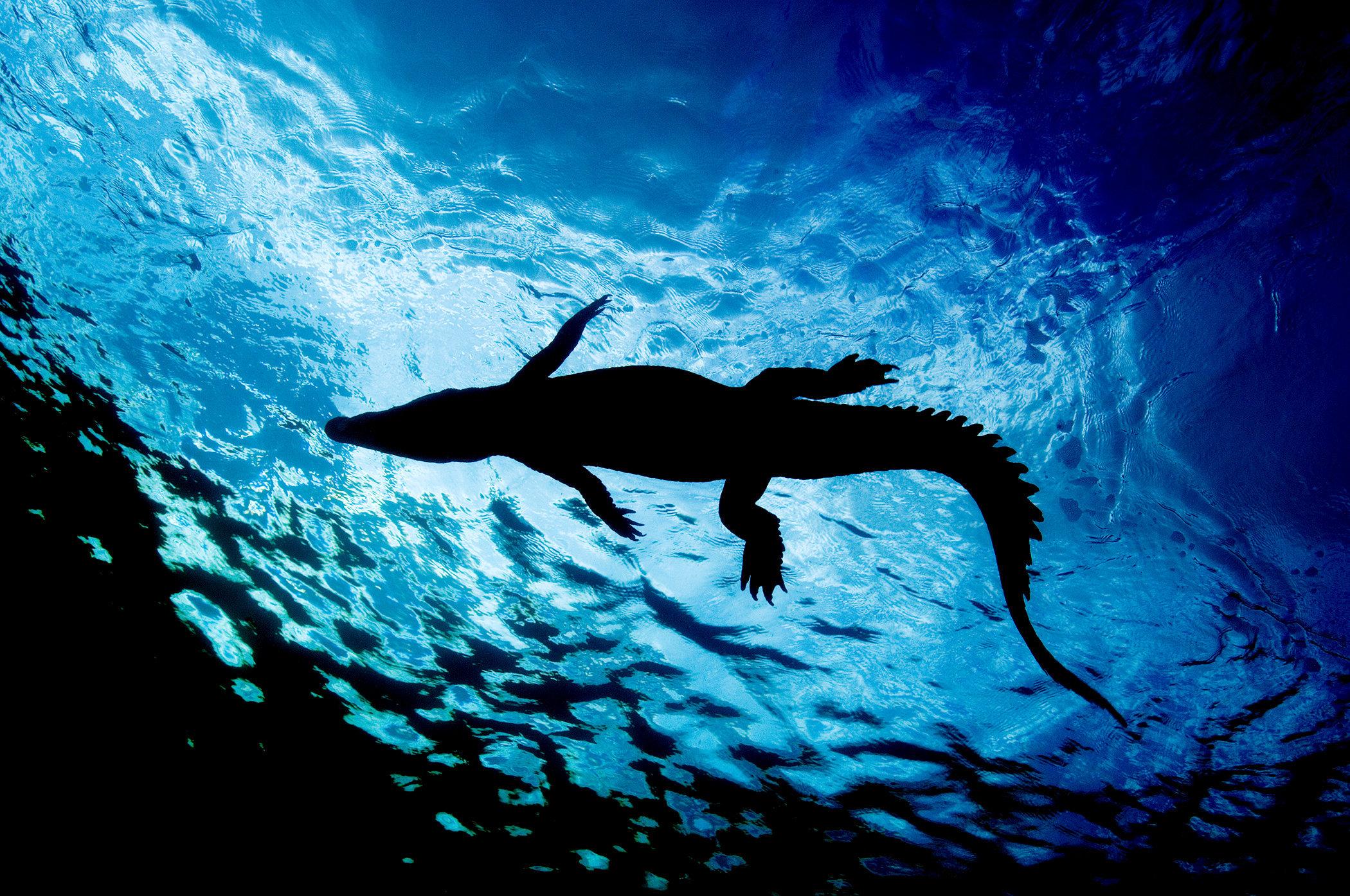Giordano_Cipriani_Fear_Wildlife.jpg