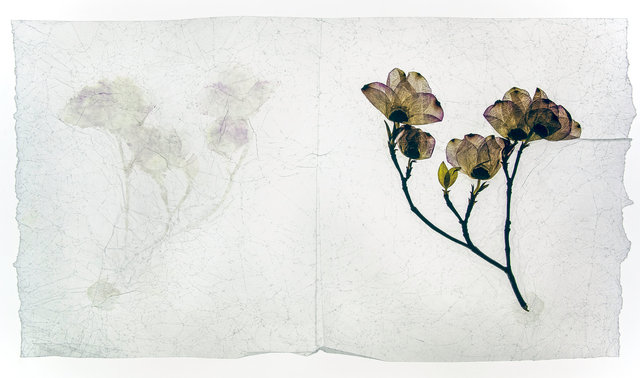 tree blossom, MA