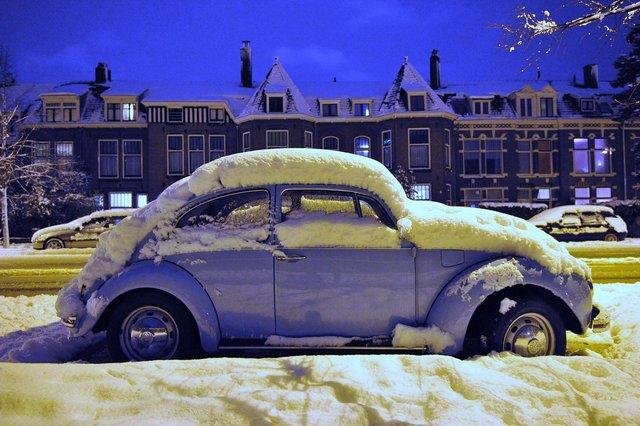 Snowbeetle