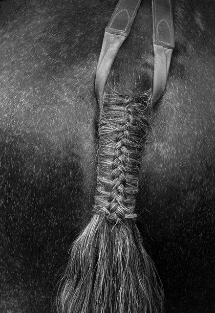 horse tail b&w 1.jpg