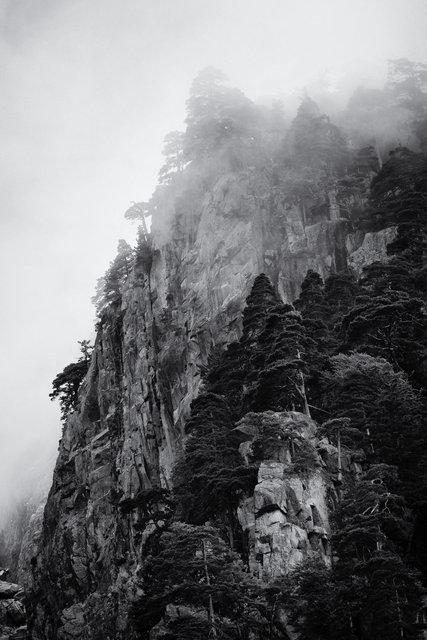 vertical fog.jpg