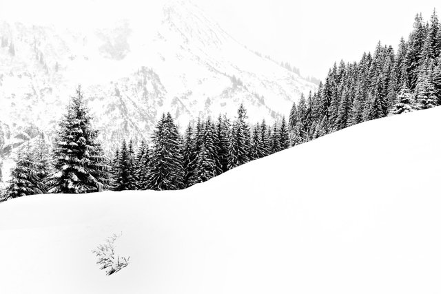 winter silence .jpg