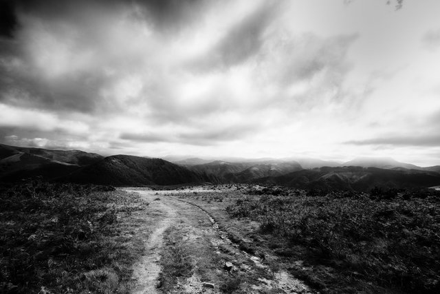 pyrenees  2.jpg
