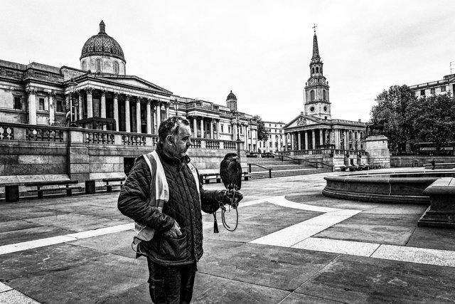 Falcon handler, Trafalgar Square