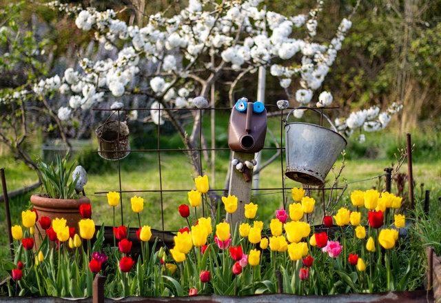 spring web.jpg
