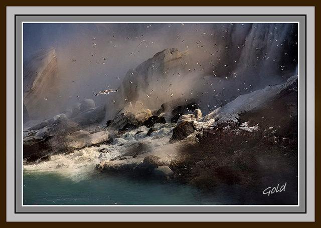 _56A2287-1+seagull-Framed.jpg