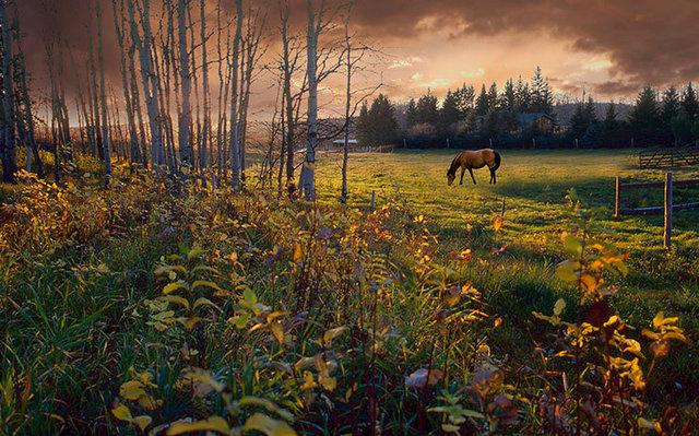 img842+horse.jpg