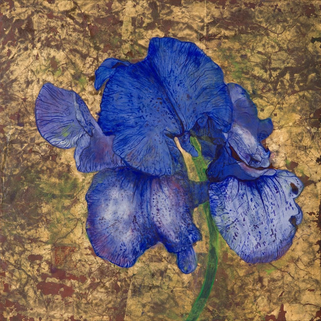 Blue Iris Messenger