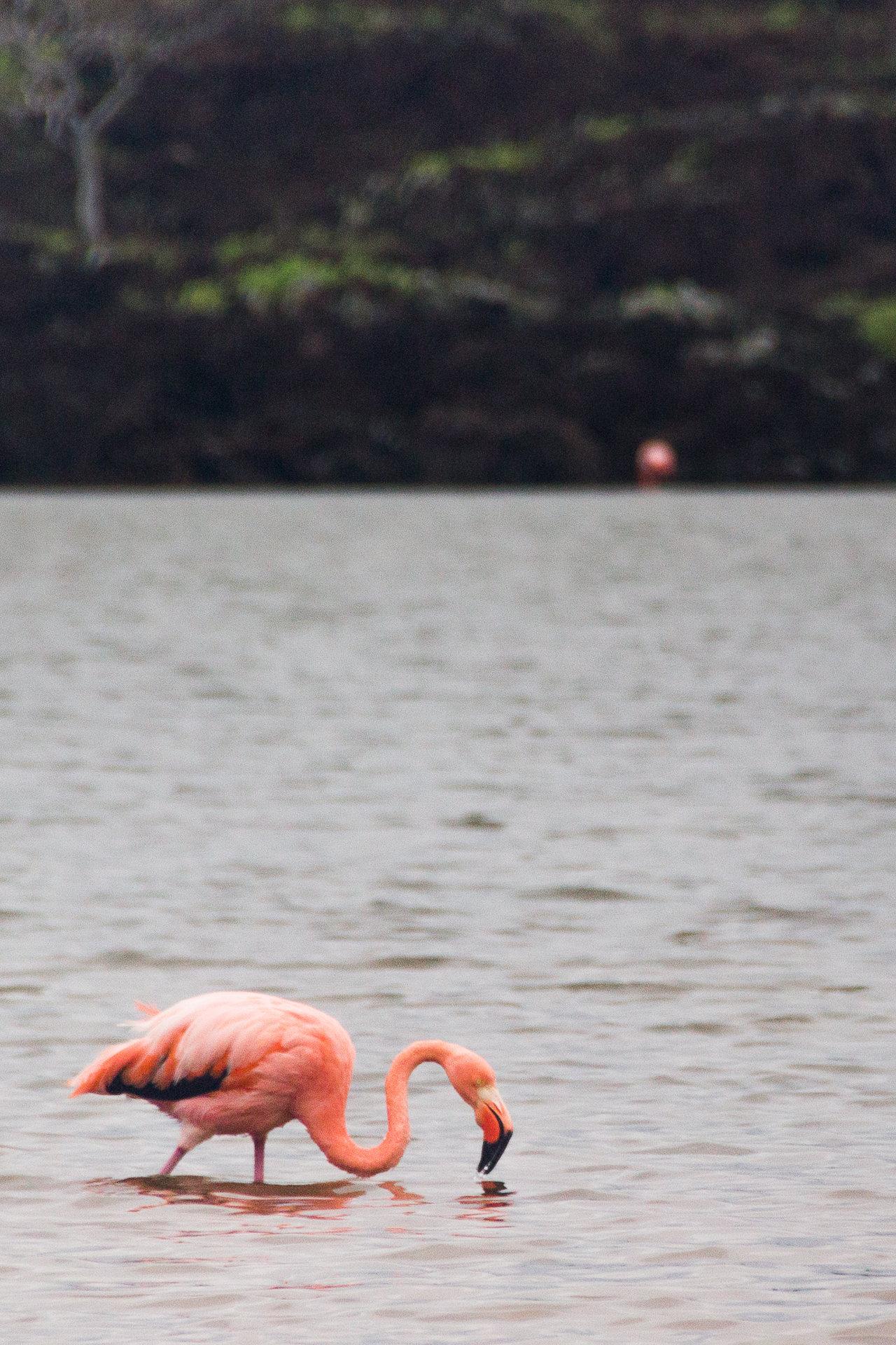 150421_Galapagos-1507.jpg