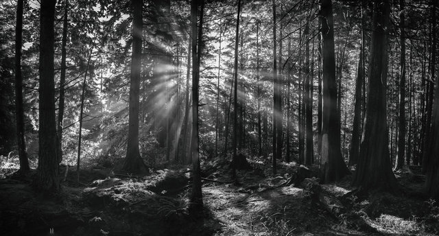 Stanley Forest2BW.jpg