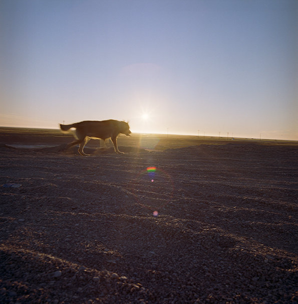 Chomper on the tundra with a low summer night sun, August 2014