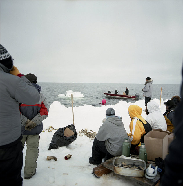 getting ready for marking the whale, May 2009