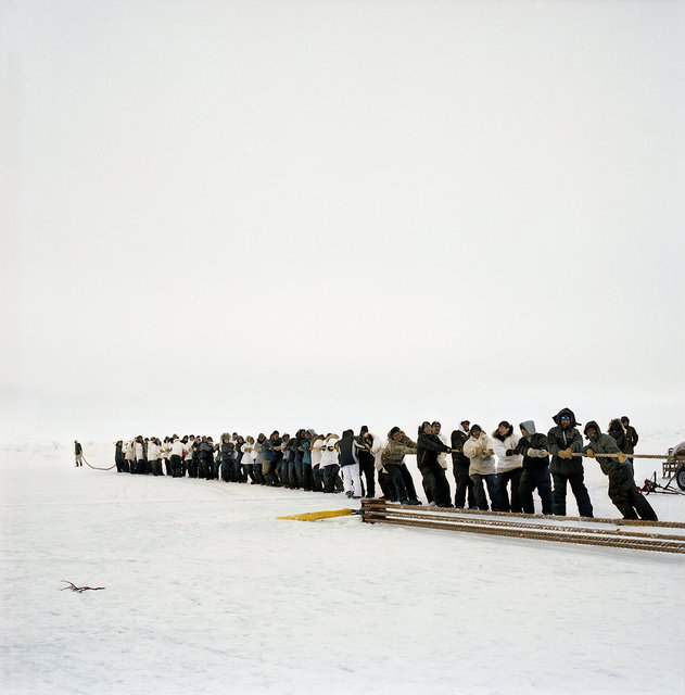 pulling up the whale, 2012
