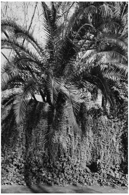 Trees  03.jpg