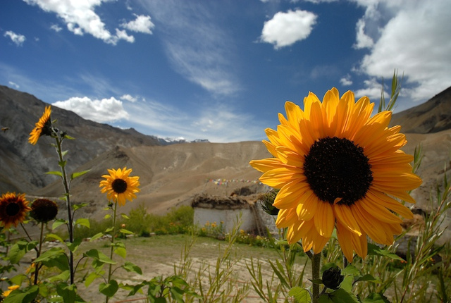 Ladakh_39.jpg