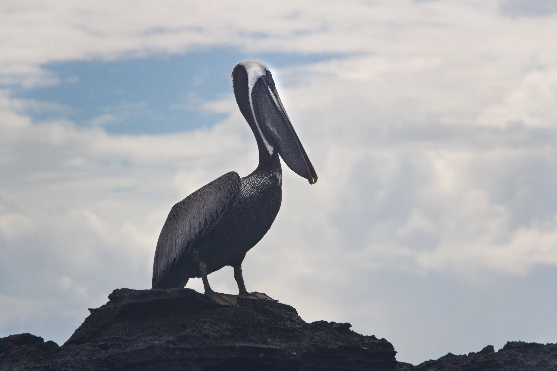 150420_Galapagos-1396.jpg