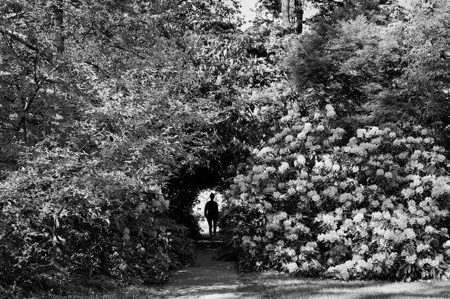 Stanley park road 08.jpg
