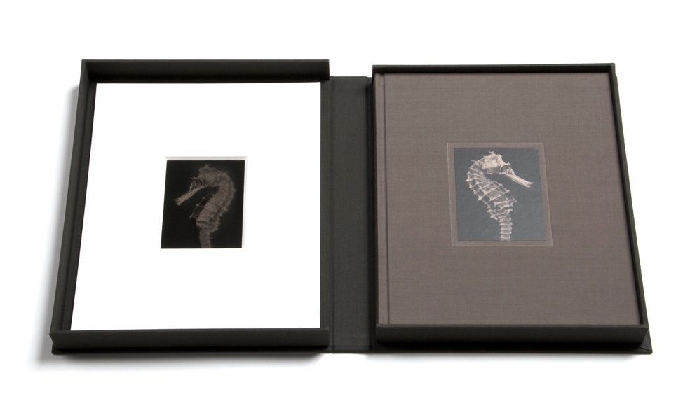 Limited Edition with Collector's Box & Unique Tintype Hippocampus #40