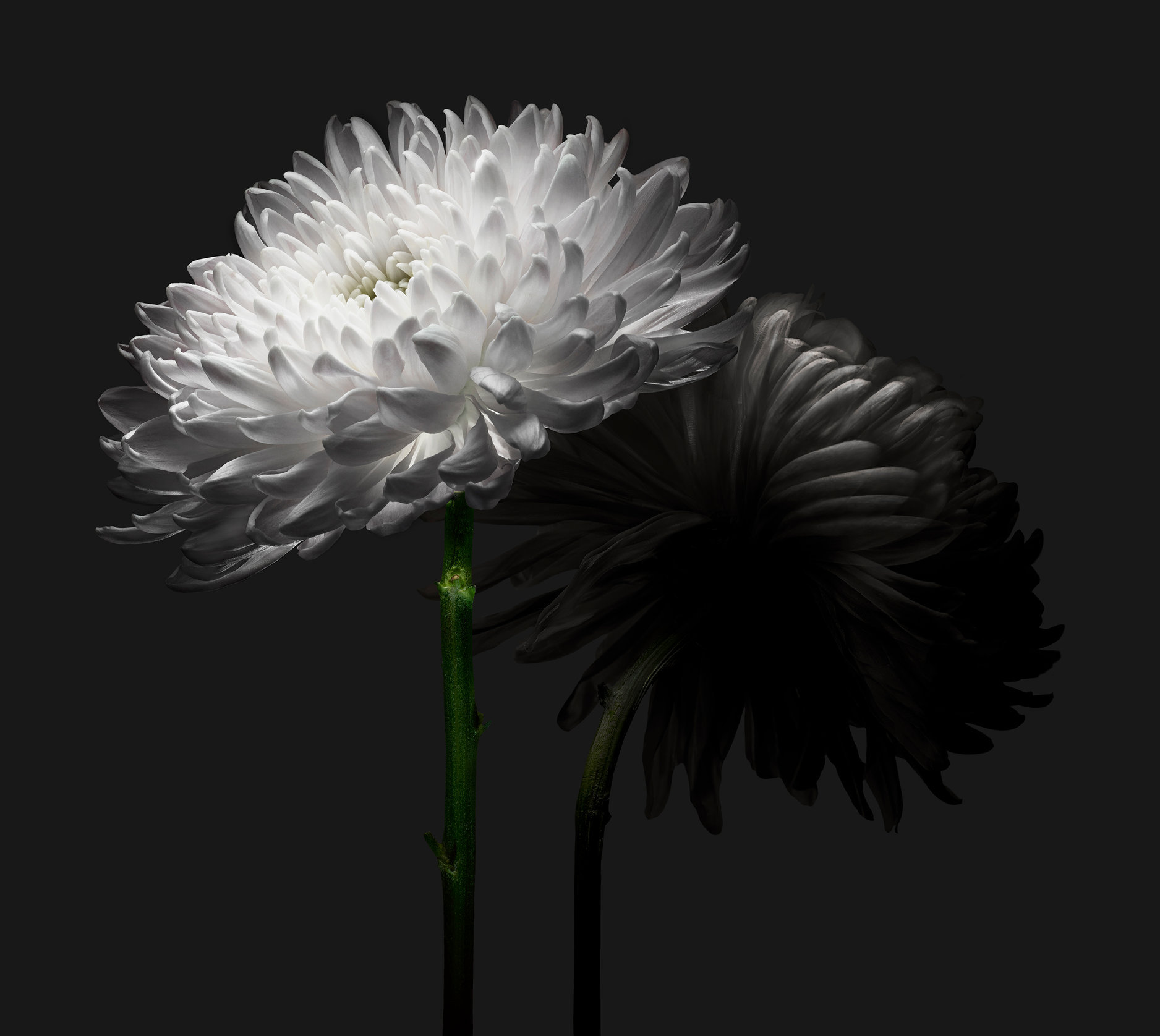 Flower (web).jpg