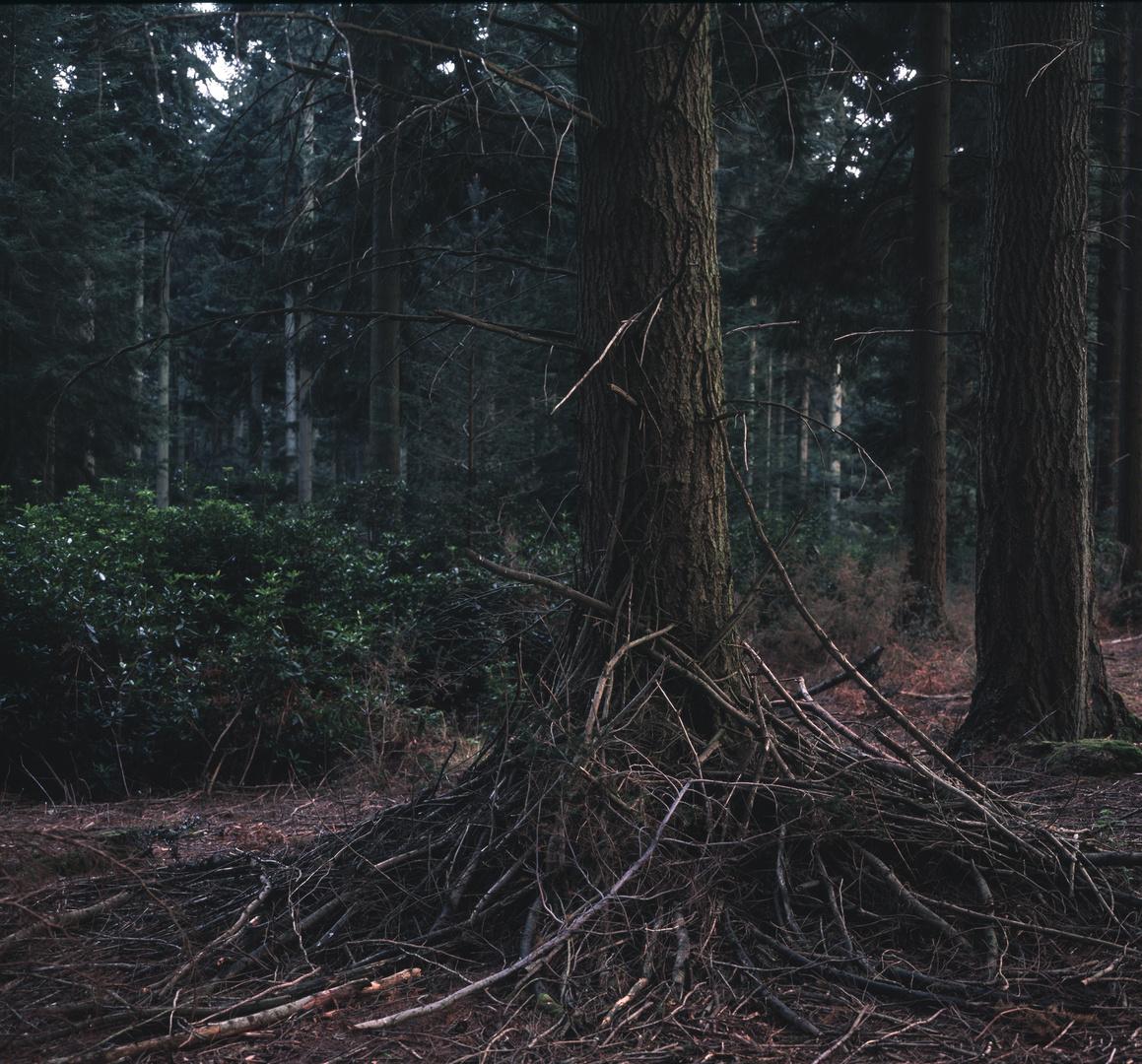 tree edit.jpg