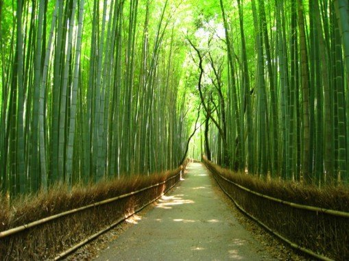 kyoto_bamboo_forest.jpg