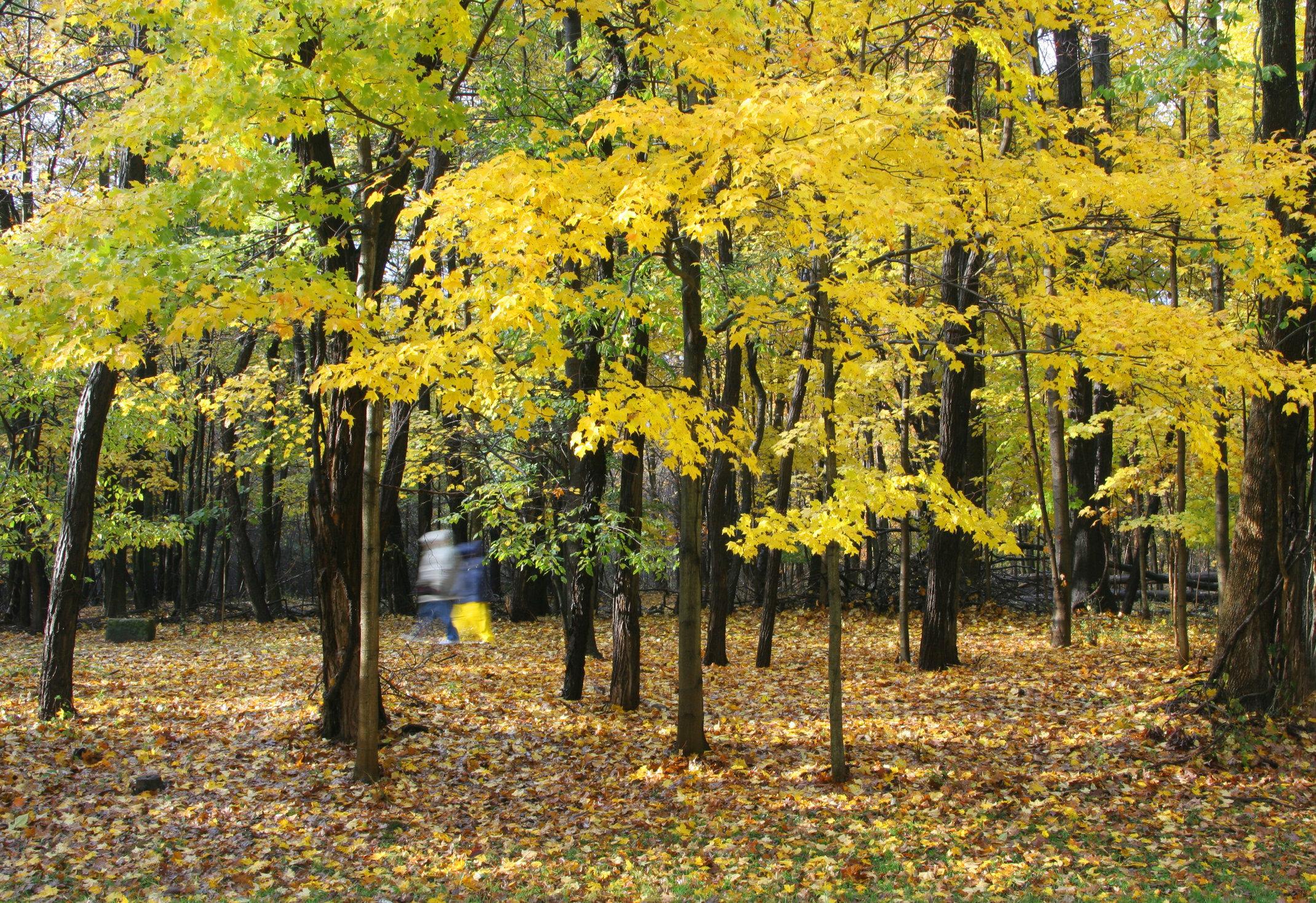 Autumn, Cuyahoga Valley National Park, Ohio