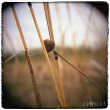 01-04-02-04 Seed Head Grass.jpg