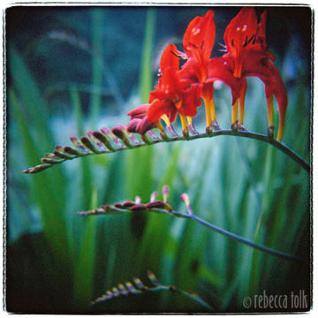 06-07-01-05 Garden Samba.jpg