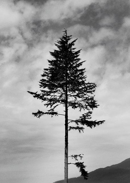 Tree-32bw.jpg