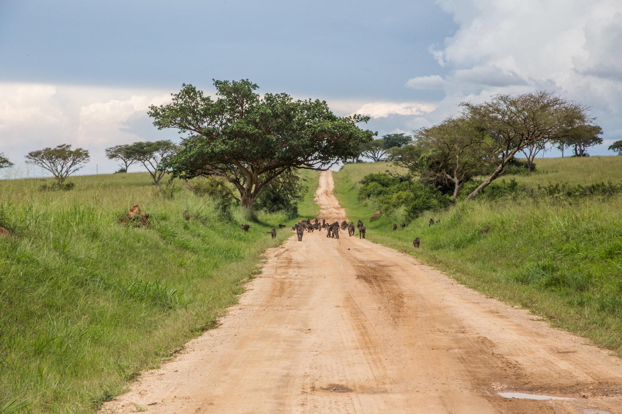 Uganda Road Trip_Series-IMG_0864-untitled.jpg
