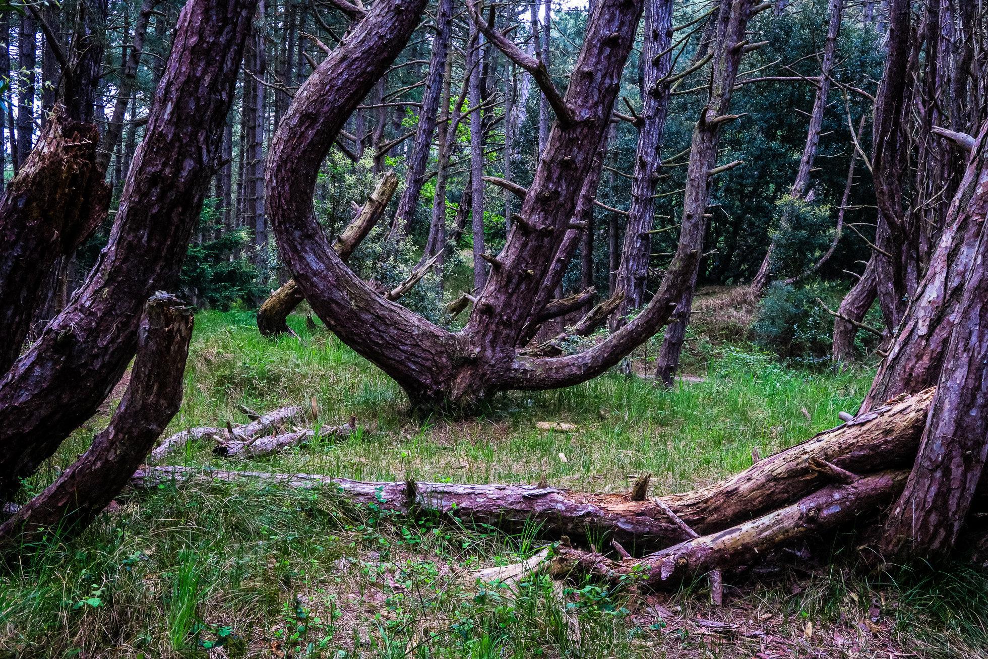 The_Wood-1412.jpg