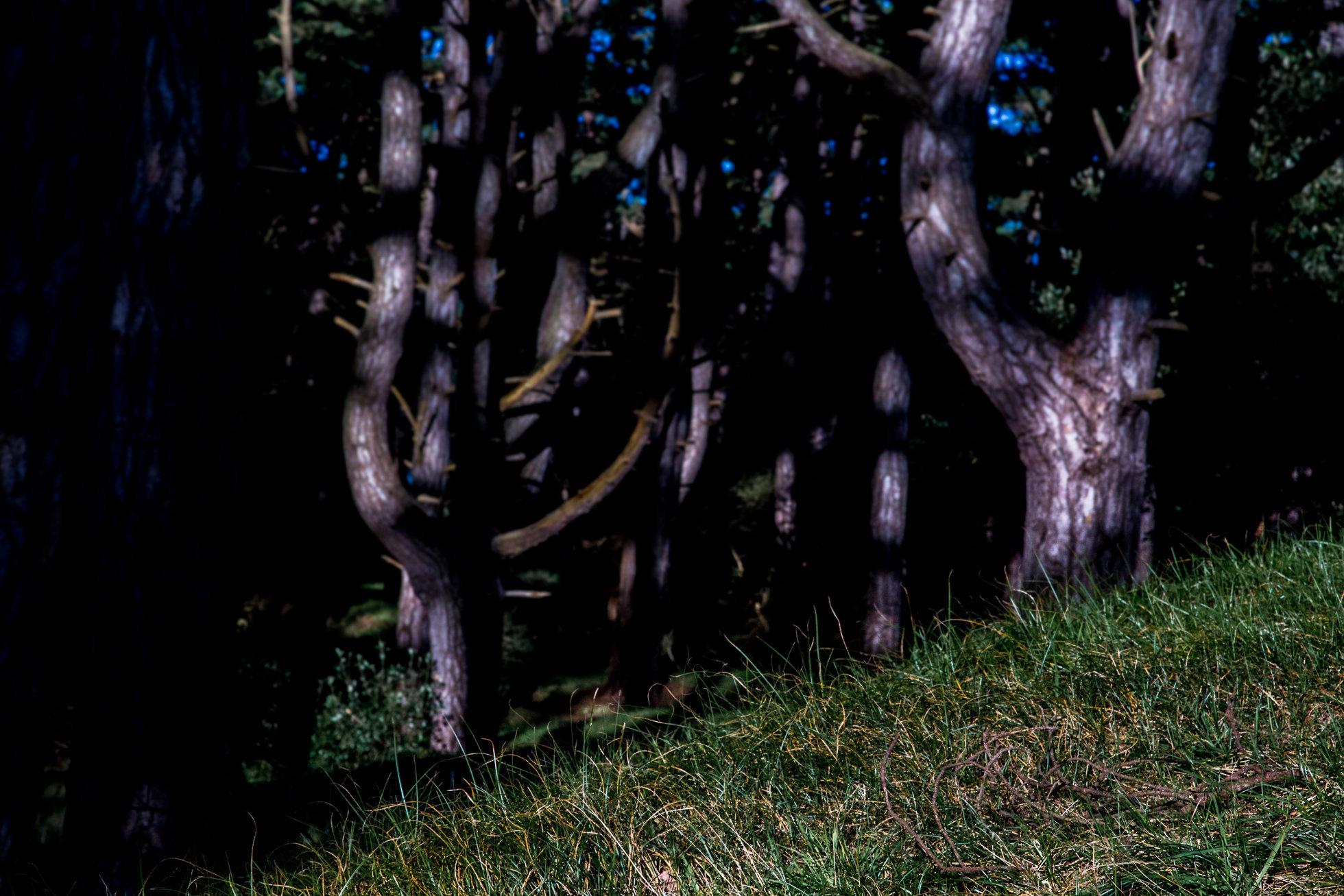 The_Wood-9062.jpg