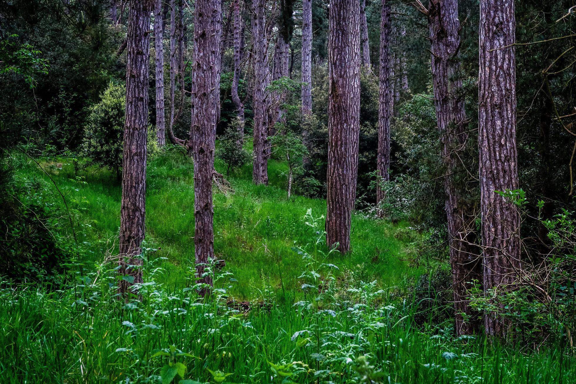 The_Wood-1393.jpg