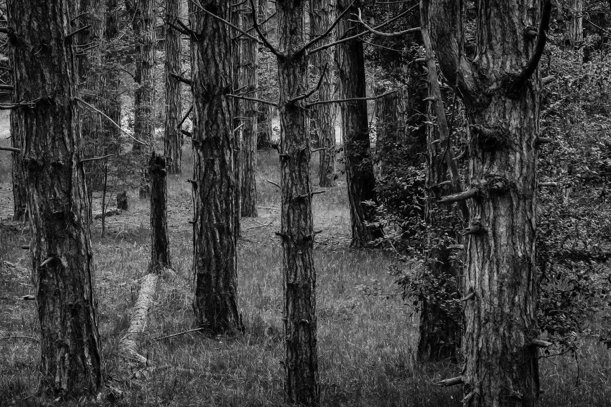 The_Wood-1406.jpg