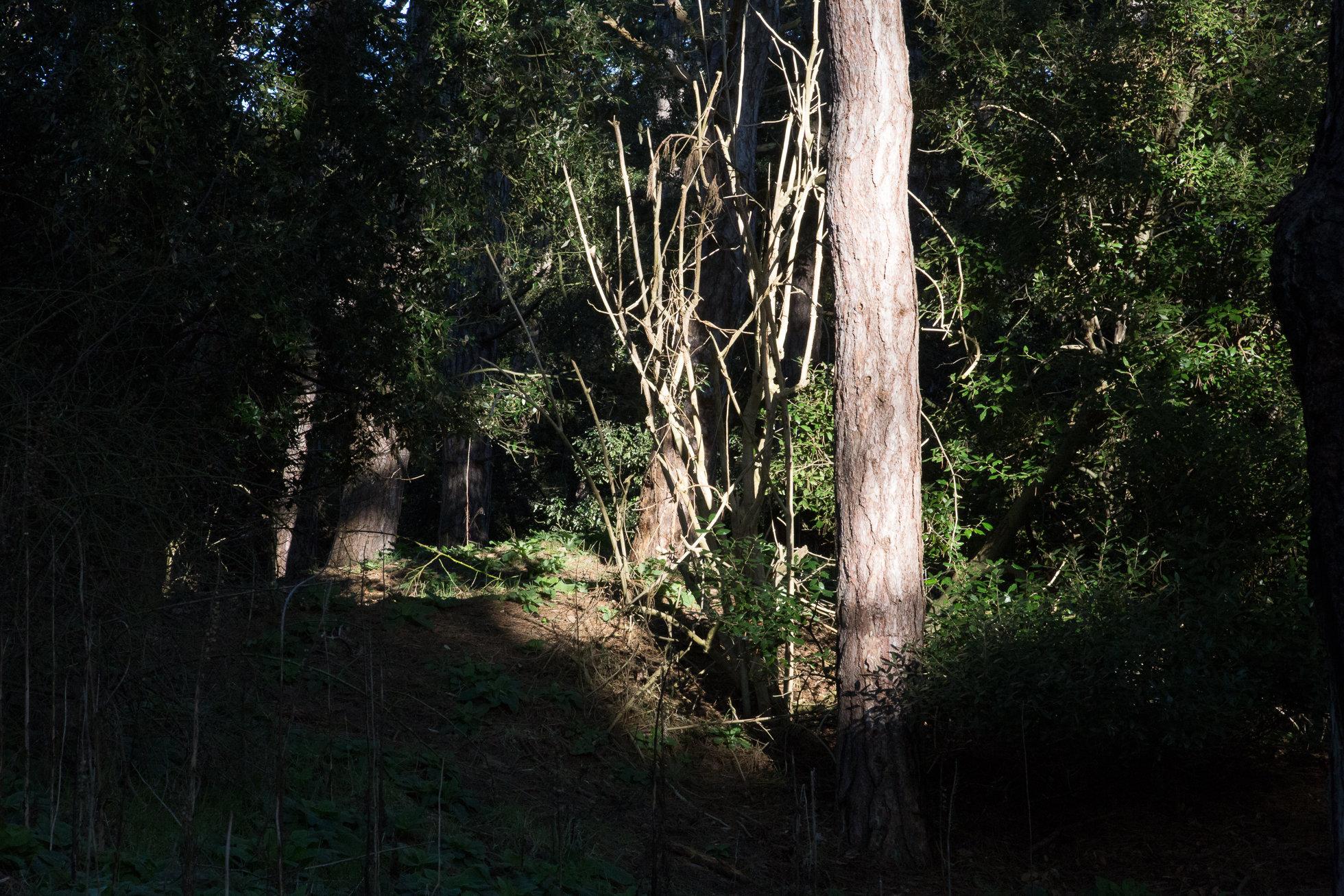 The_Wood-9097.jpg