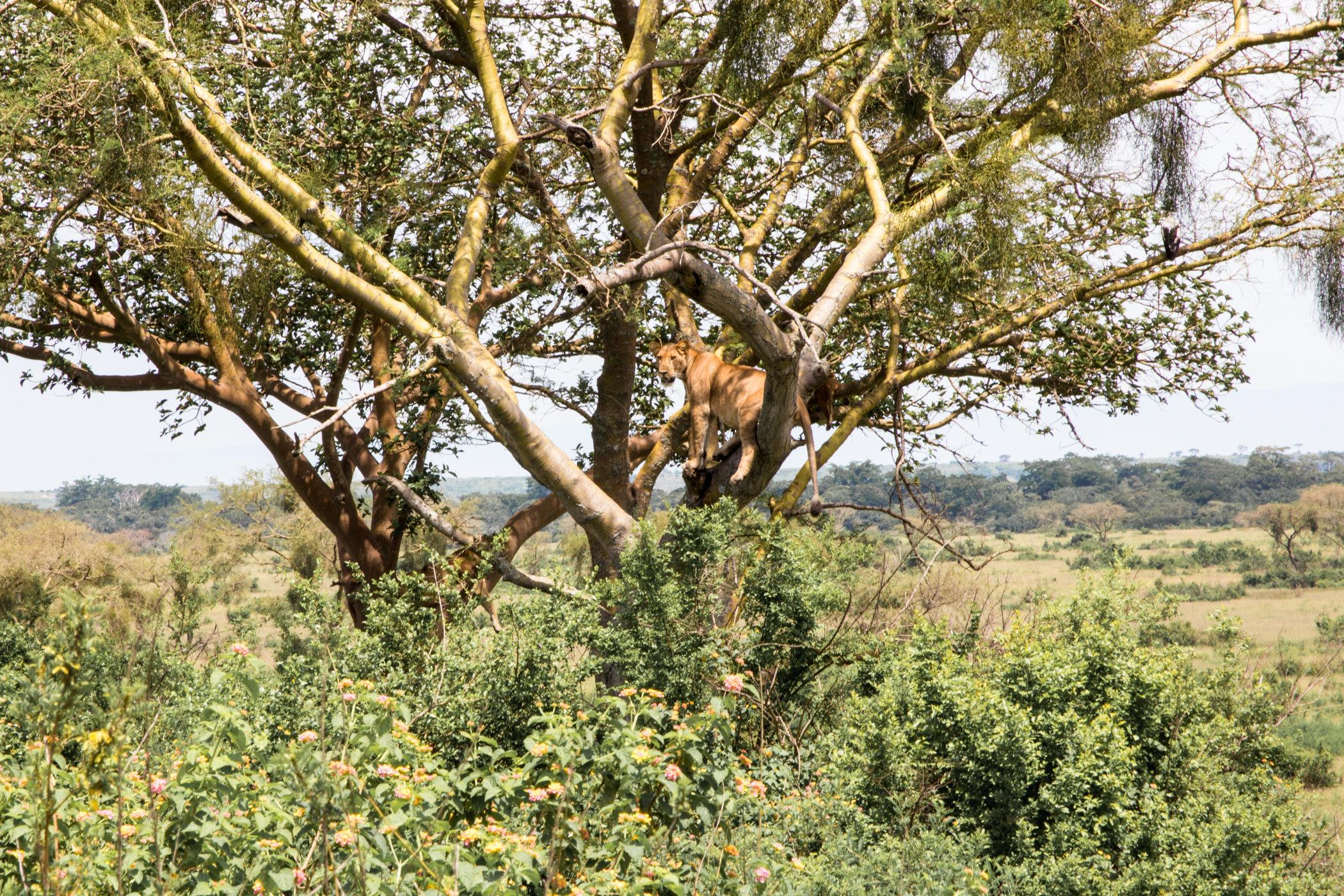 Uganda Road Trip_Series-IMG_0971-untitled.jpg