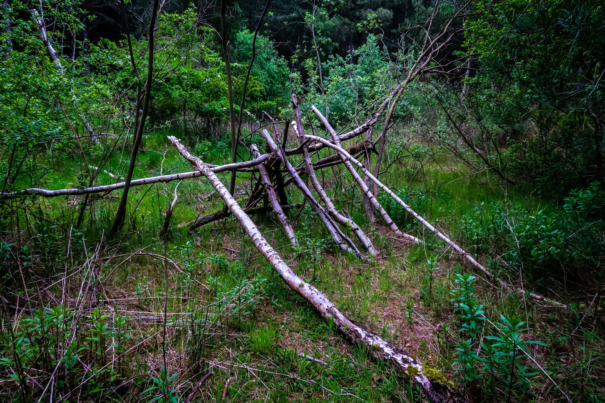 The_Wood-1389.jpg