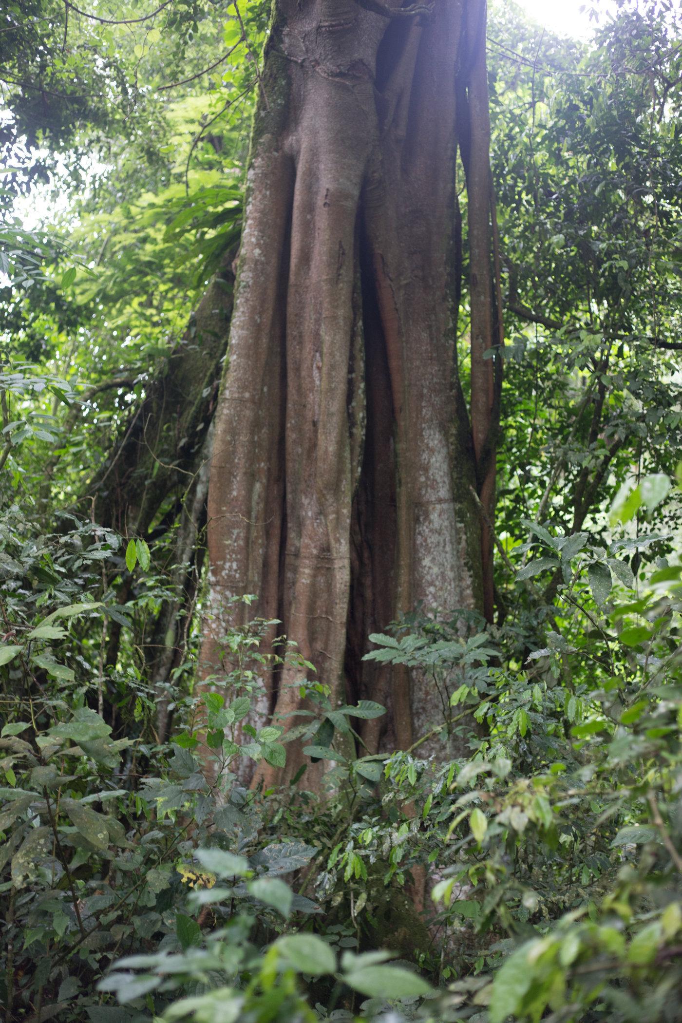 Uganda Road Trip_Series-IMG_1278-untitled.jpg