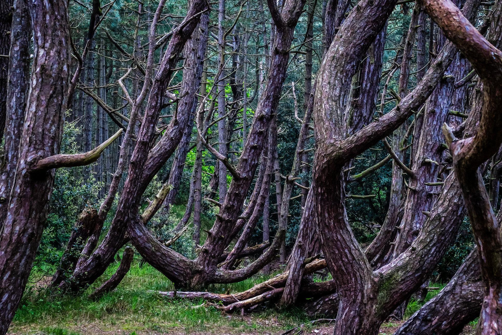 The_Wood-1411.jpg