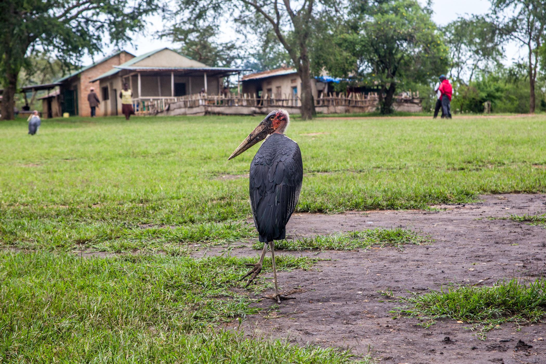 Uganda Road Trip_Series-IMG_0314-untitled.jpg
