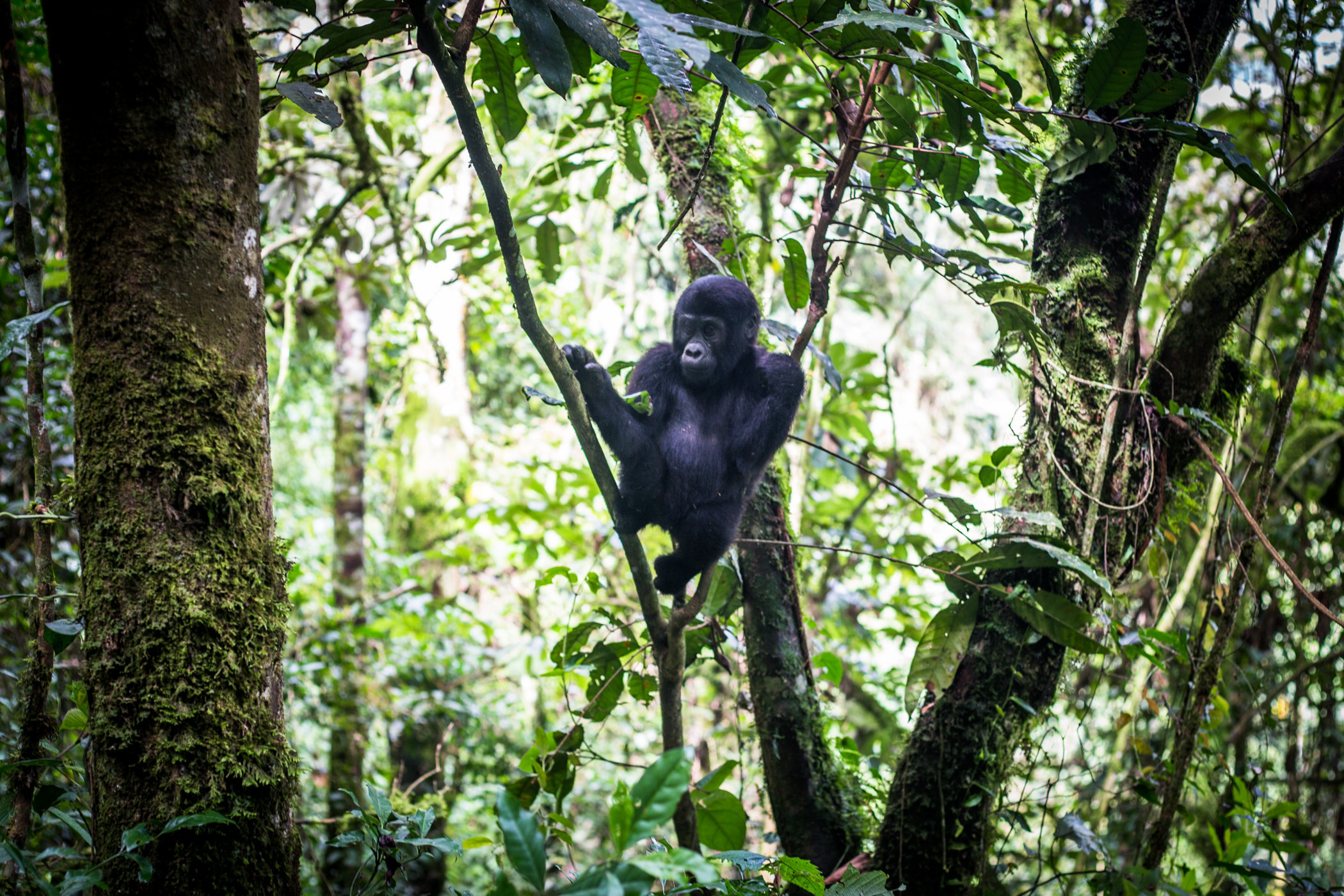 Uganda Road Trip_Series-IMG_0613-untitled.jpg
